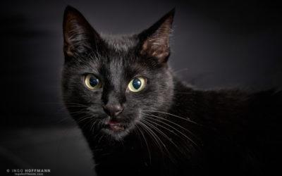 Katzen Portrait